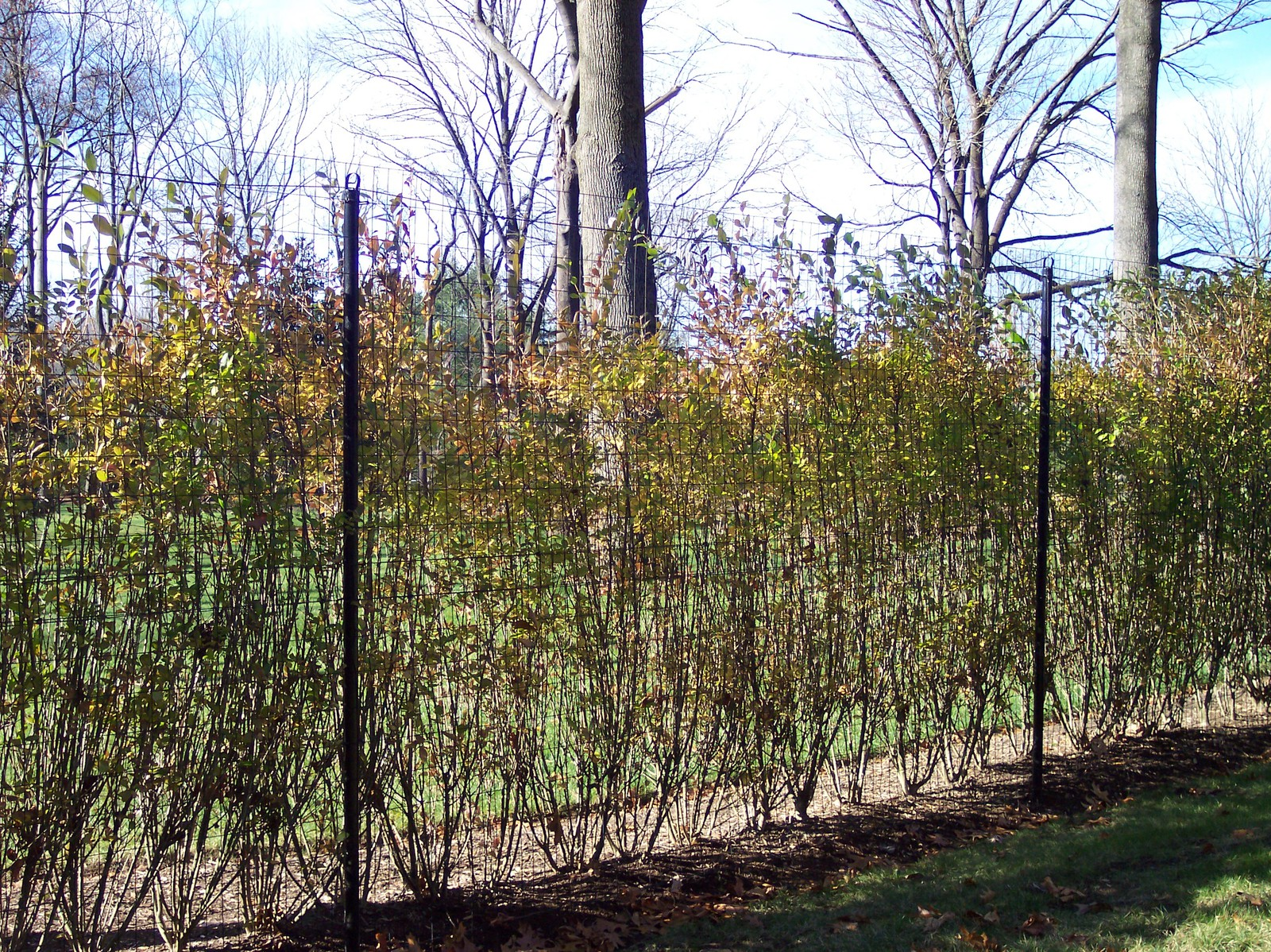 Deer Fencing - MD and Sons Fencing NJ